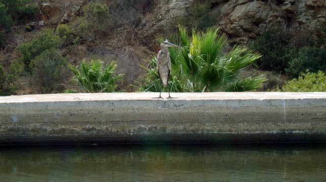 Blue Heron Lake San Marcos